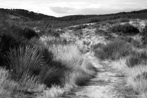 Camino de Santiago (Tomohiro Muda)